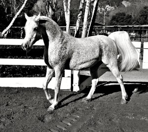 Jump moving in corral, photo by Sarah Lyon