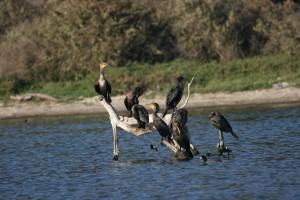 malibu lagoon birds_Mark Boling_CityMalibu